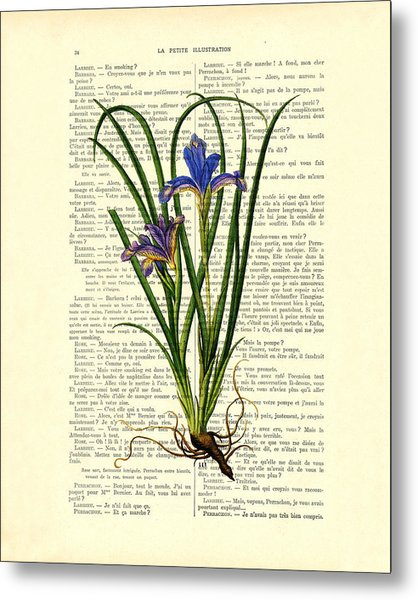 Black Iris Antique Illustration On Dictionary Page Metal Print