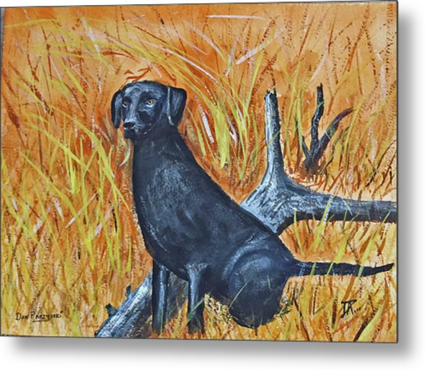 Black Lab-2 Metal Print