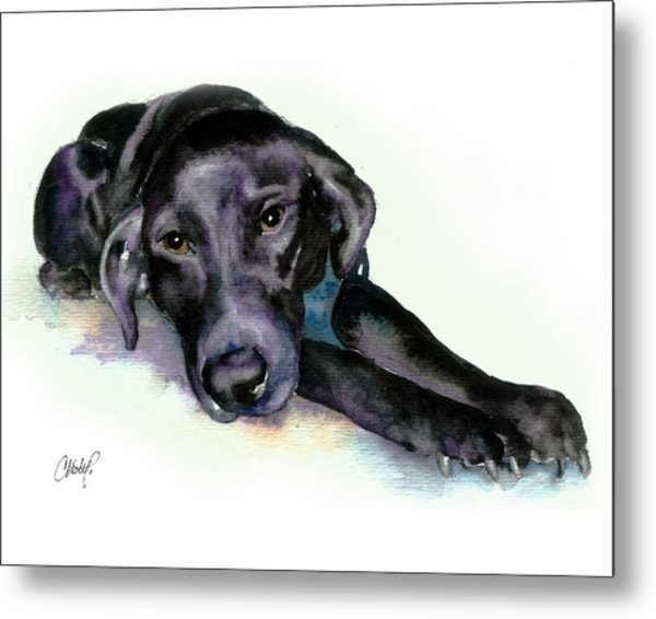 Black Lab Stretching Out Metal Print