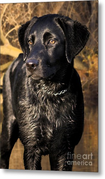 Black Labrador Retriever Dog Metal Print