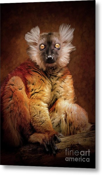 Black Lemur Metal Print