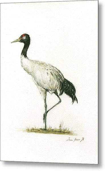 Black Necked Crane Metal Print