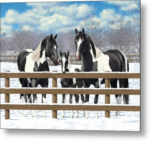 Black Paint Horses In Snow Metal Print by Crista Forest