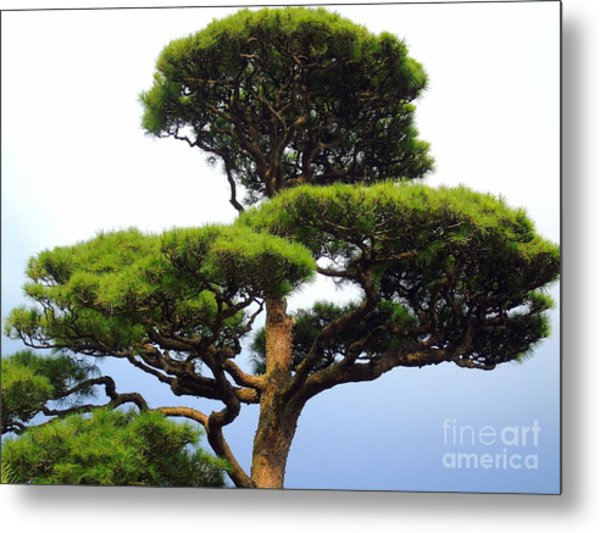 Black Pine Japan Metal Print