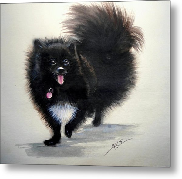 Black Pomeranian Dog 3 Metal Print