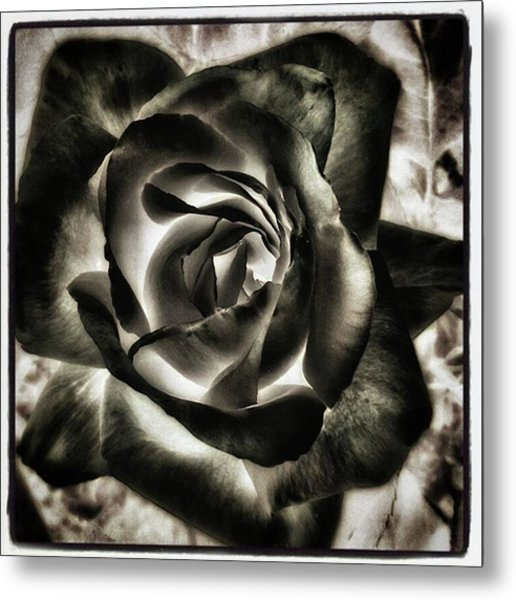 Metal Print featuring the photograph Black Rose. Symbol Of Farewells by Mr Photojimsf