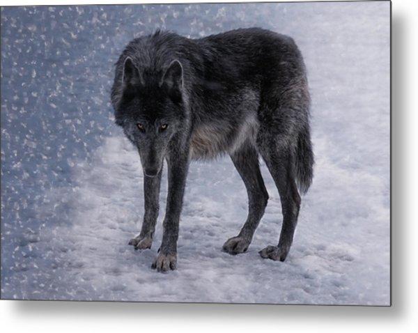 Black She-wolf Metal Print