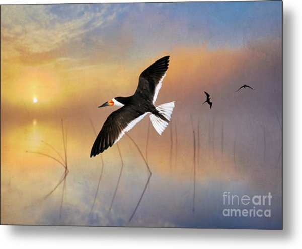 Black Skimmer At Sunset Metal Print