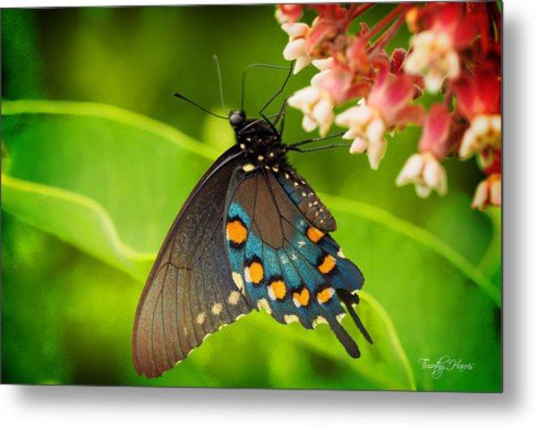 Black Swallowtail #1 Metal Print