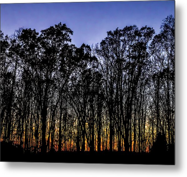Metal Print featuring the photograph Black Trees by Onyonet  Photo Studios