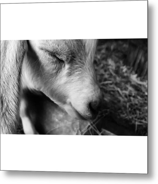 #blackandwhite #bnw #bnw_captures Metal Print by Natalie Anne