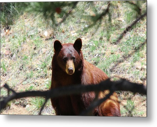 Blackbear1 Metal Print