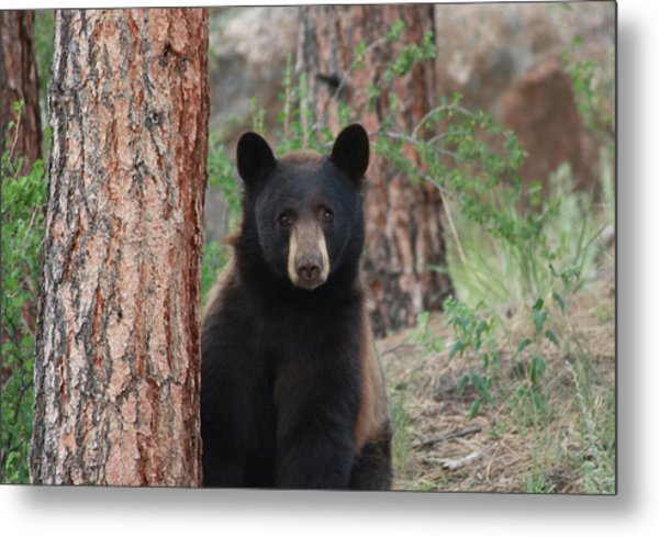 Blackbear2 Metal Print