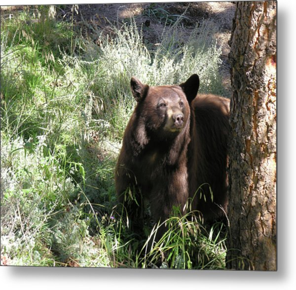 Blackbear3 Metal Print