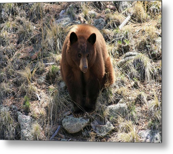 Blackbear4 Metal Print