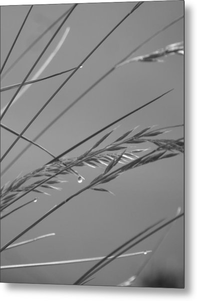 Blades Of Gray Metal Print