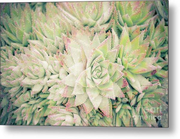 Blanket Of Succulents Metal Print