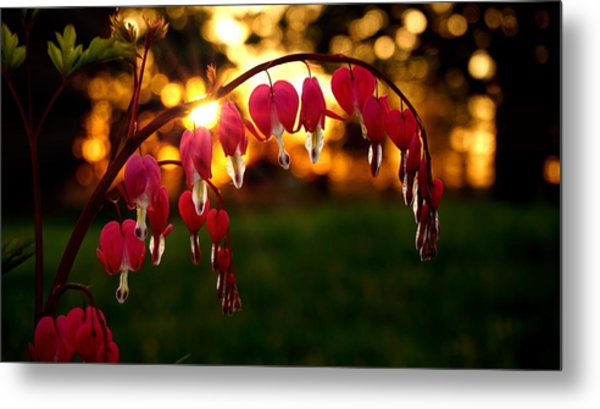 Bleeding Heart Sunset Metal Print