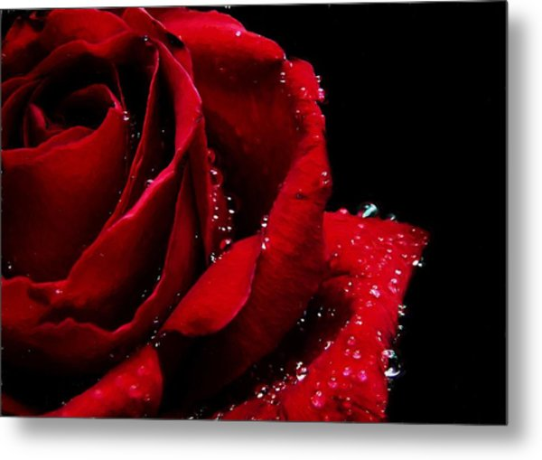 Blood Red Rose Metal Print