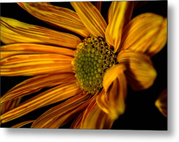 Bloom Bloom Metal Print