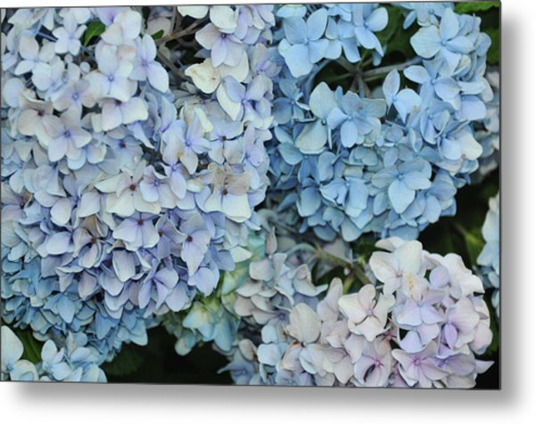 Bloom Cluster Metal Print by JAMART Photography