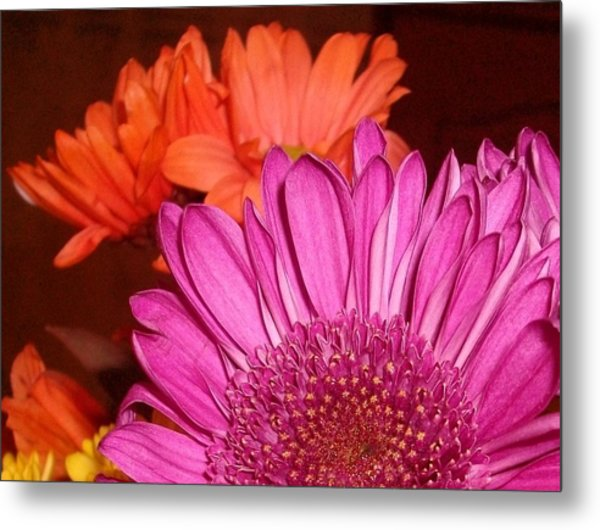 Blooming Colors Metal Print by LDPhotography Stephanie Armstrong