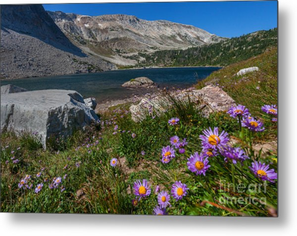 Blooming In Snowy Range Metal Print