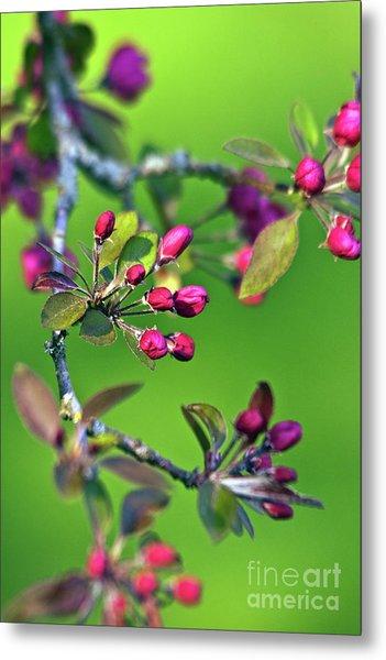 Blooming Spring Poetry Metal Print