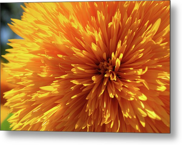 Blooming Sunshine Metal Print