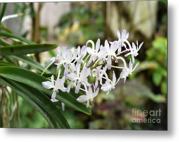 Blooming White Flower Spike Metal Print