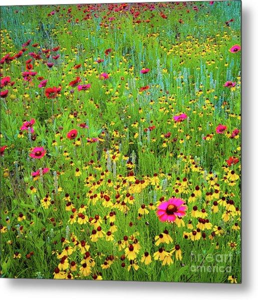 Blooming Wildflowers Metal Print