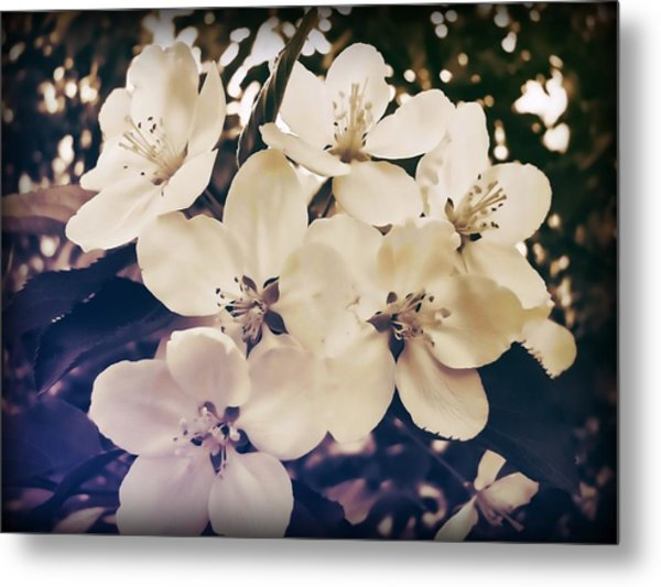 Blossom Metal Print by JAMART Photography