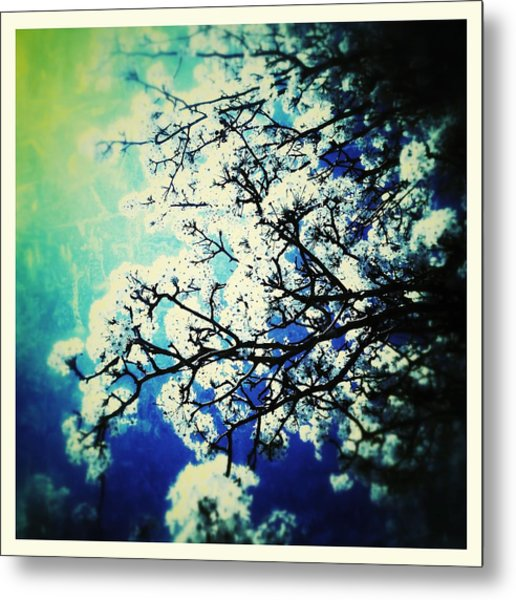 Blossoming Metal Print
