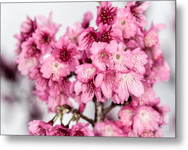 Blossoms 3 Metal Print
