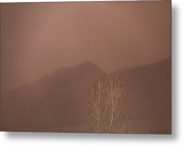 Metal Print featuring the photograph Blowing Around by Deborah Hughes