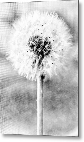 Blowing In The Wind Pencil Effect Metal Print