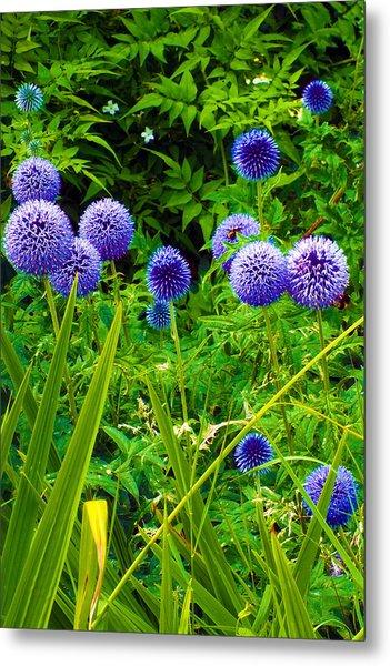 Blue Allium Flowers Metal Print