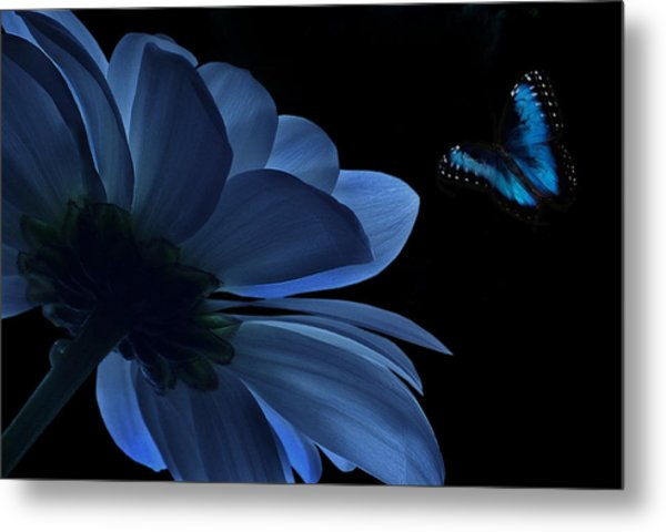 Blue Beauty Metal Print by Marrissia Ruth