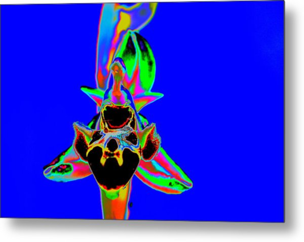 Blue Bee Orchid Metal Print
