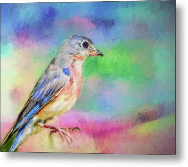 Blue Bird On Color Metal Print