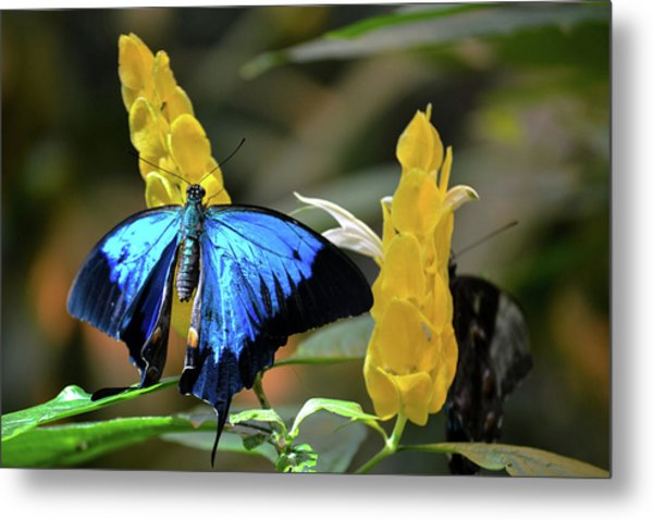 Blue Beauty Butterfly Metal Print