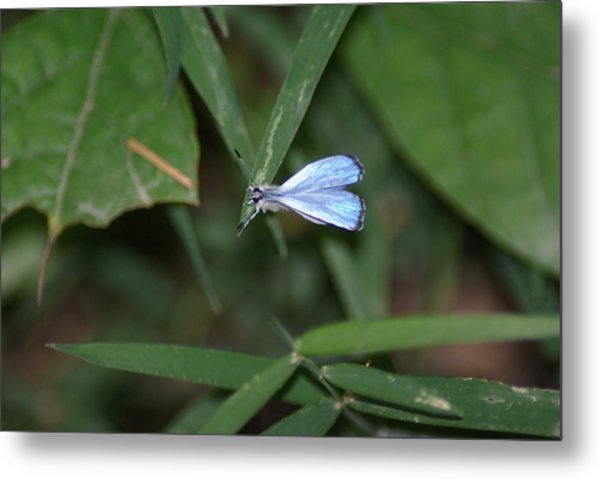 Blue Butterfly Metal Print by Heather Green