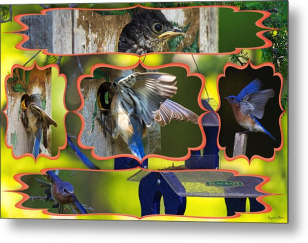 Blue Collage 2 Metal Print by Angel Cher