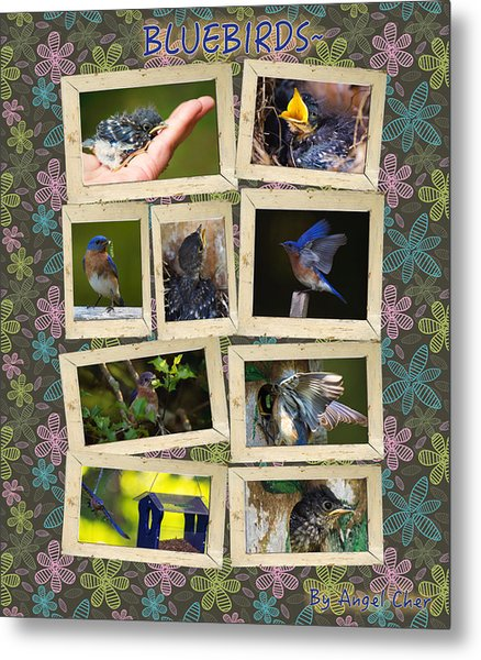 Metal Print featuring the photograph Blue Collage by Angel Cher