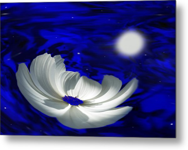 Blue Cosmos Metal Print by Terence Davis