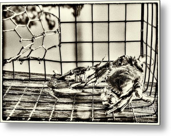 Blue Crabs - Vintage Metal Print