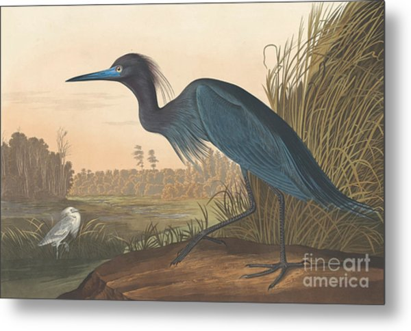 Blue Crane Or Heron Metal Print