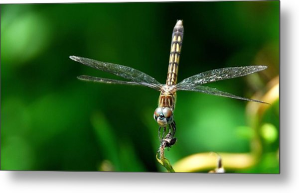 Blue Dasher Metal Print