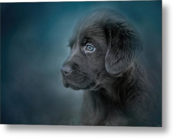 Blue Eyed Puppy Metal Print