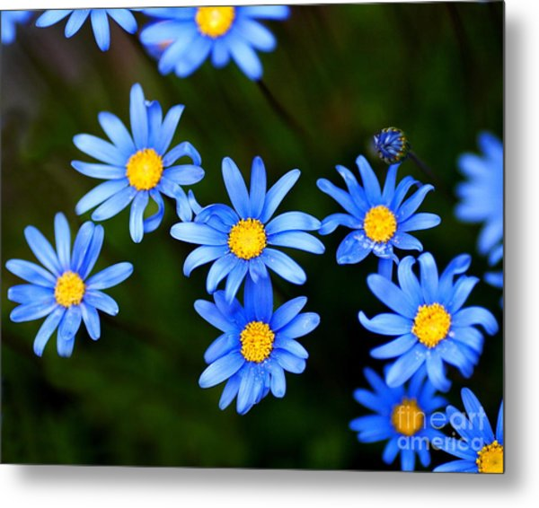 Blue Flowers Metal Print by Wingsdomain Art and Photography